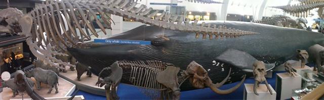 TheNaturalHistoryMuseum1
